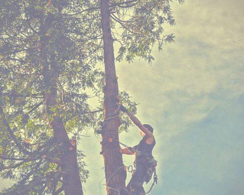 Trädfällning Kungsbacka